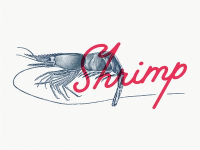 Shrimp Illustration Concept branding vintage retro etching lettering cafe engraving menu fish shrimp concept illustration
