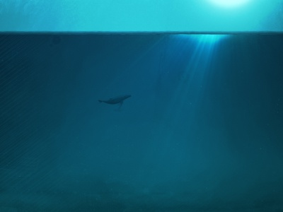 The sea illustration agrofabrice motiondesign baleen sea