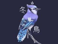 Bluejay - 冬の鳥