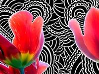 Drawing Meditation - Tulips