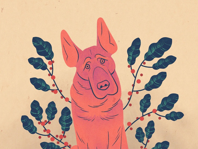 What's Wrong, Dog? procreate drawing texture plants pink illustration dog