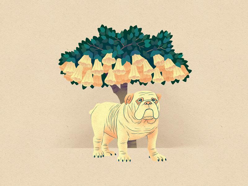 Shade tree flowers illustration drawing bulldog dog