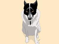 Felix (the dog)
