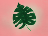 Monstera drawing