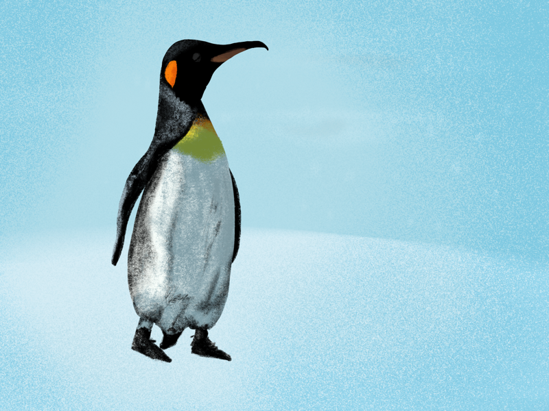 Penguin day pencil ipad drawing nature animal penguin illustrator art illustrator design illustrator illustration