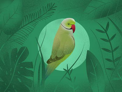 Parrot in the forest animal drawing leaves grain artmash green nature procreate forest parrot illustration