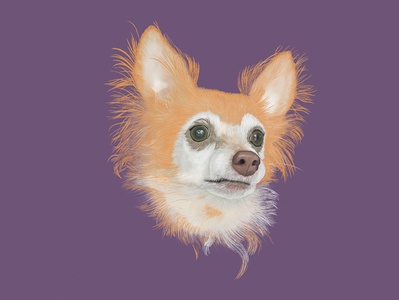 Charlie ipad procreate pets pet portrait pet illustration dog portrait dog digital illustration