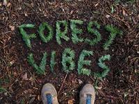 Forest Vibez