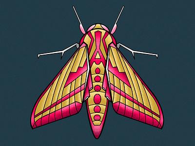 elephant hawk moth stylised textured illustration butterfly moth