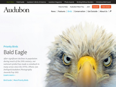 Intense audubon birds nature mule design