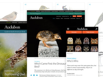 National Audubon Society audubon birds nature editorial mule design