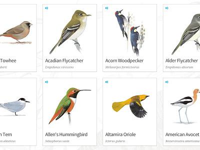 Bird Cards audubon birds nature editorial illustration mule design