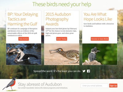Stay Abreast birds audubon nature photography fundraising non-profit mule design