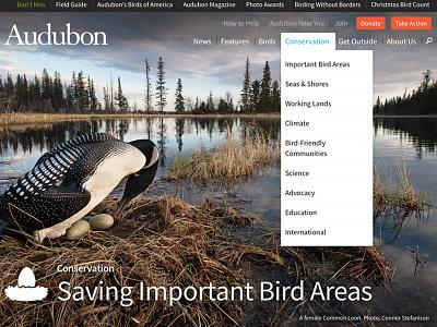 Powerful Imagery birds audubon nature photography fundraising non-profit mule design