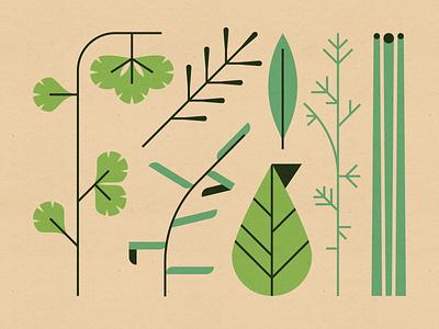 Herbs tarragon spices mid century modern cilantro rosemary bay leaf basil dill chives garnish food herbs vector design illustration stylized