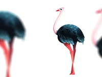 Ostrich Aint Fly explainervideo photoshop design character illustration