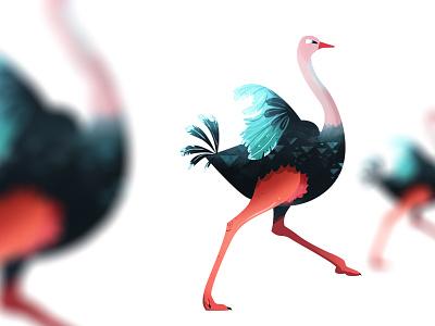 Ostrich Run characterdesign photoshop art illustration bird birds ostrich
