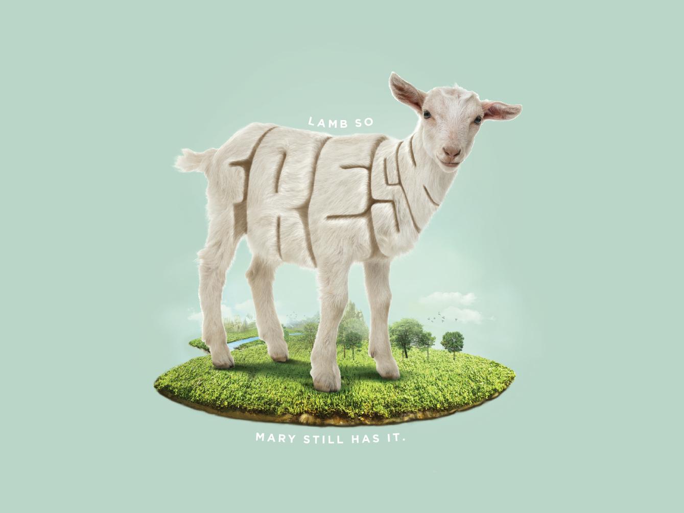Lamb So Fresh! fresh lamb advertising campaign typography illustraion