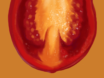 Tomato cross section healthy food vegetable food illustration illustration photoshop realistic digital art digital painting tomato