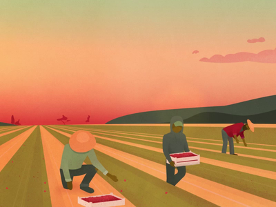 Farm worker conditions field sky sun set fruit nature picking after effects illustrator farming berry conditions worker farm