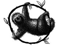 Sloth Drawing