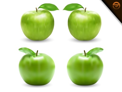 Realistic green apple vector illustration with gradient mesh