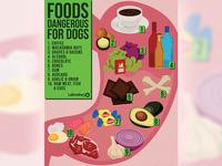 Foods Infographic