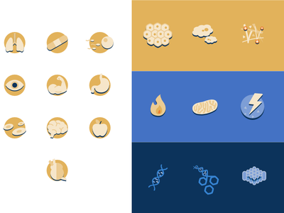 Biology Icons presentation heart body parts biology vector medical icon