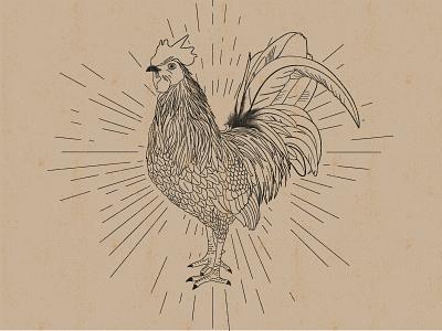 Vintage Rooster rooster blackwhite illustration animal vector