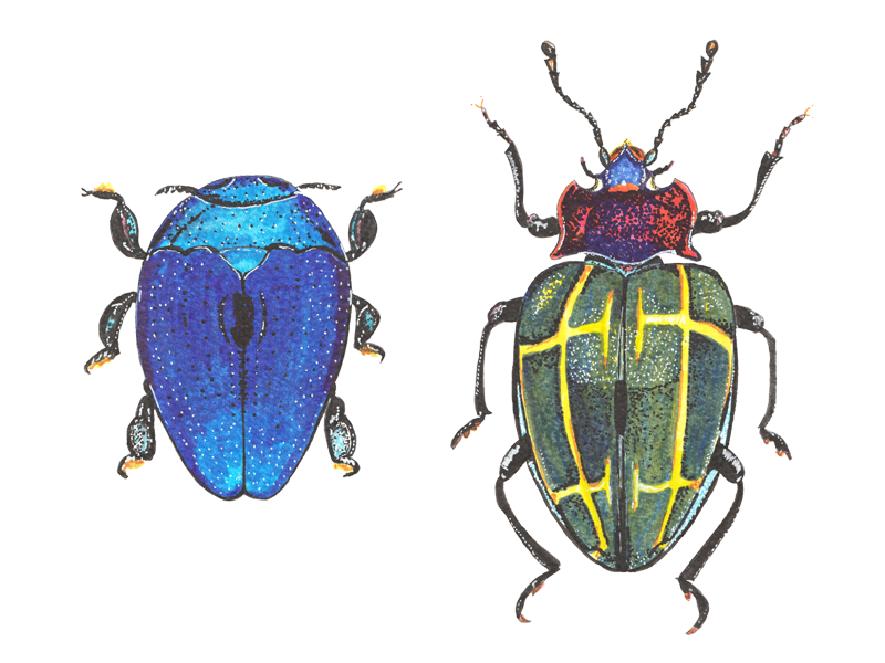 Beetles in watercolour markers by WhittleDesignStudio on