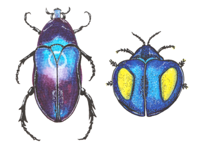 Beetles in watercolour markers