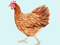 Taloula the Hen