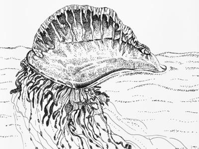 Inktober 2018 - Portuguese man o' war ink illustration ink drawing inktober 2018 inktober drawing line art hand drawn pen and ink illustration