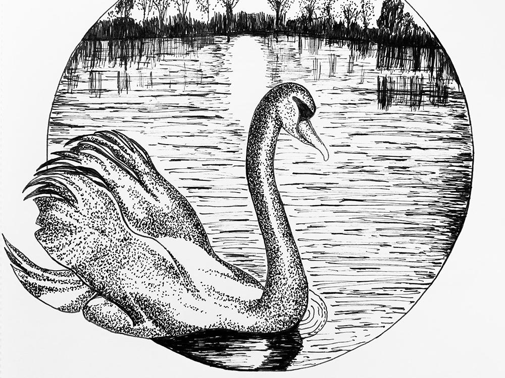 Inktober 2018 Day 2 Swan Lake By Whittledesignstudio Dribbble