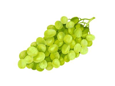 Green Grapes editorial illustration lifestyle cook book food fruit food drawing food illustrator food illustration