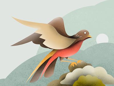 Bird Illustration web graphic animals ux ui design vector artwork bird illustration drawing texture illustration bird