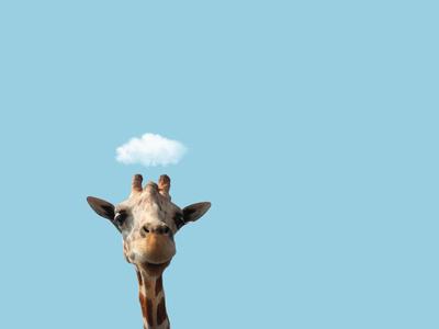Petit Cloud Series - Hey!