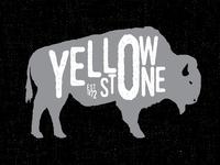 American Bison - Yellowstone