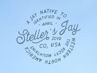 Stellar Jay
