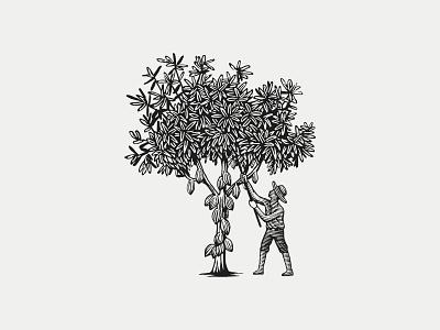 Logo for Le Passeur D'Arômes farm cocoa tree logo tree vector engraving engraving engraved