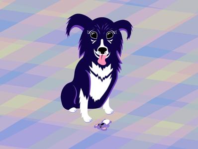 Roxy border collie dog illustration dog vector cute character design illustrator illustration design