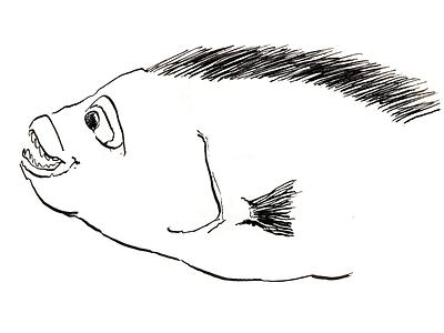 ··· illustration drawing fish ink