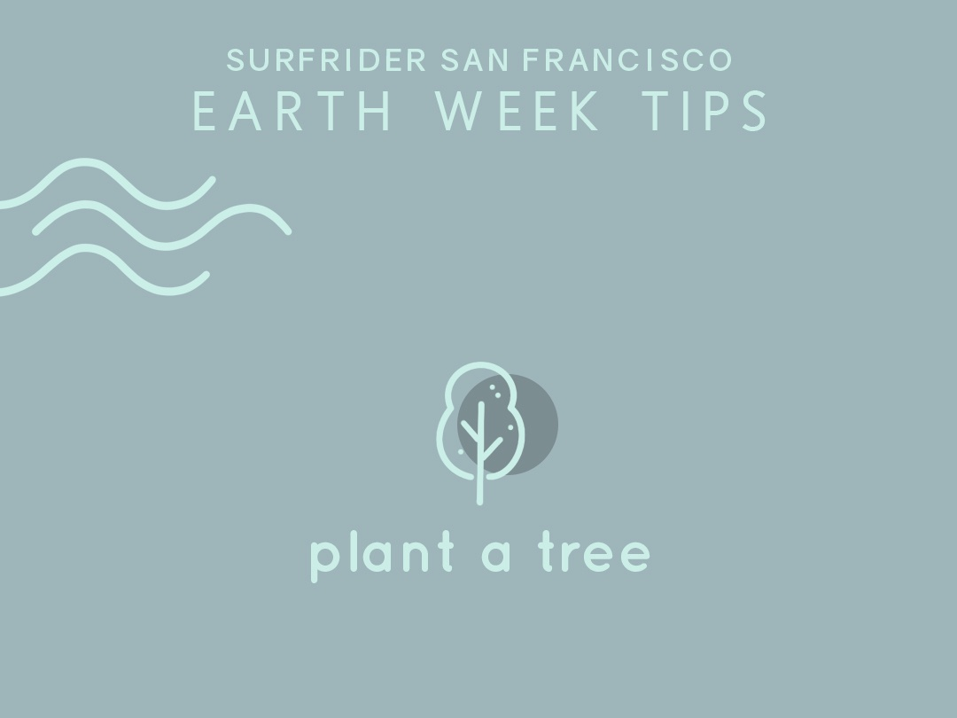 Tip #9 tip nature tree earthweek earthday iconography icon illustration design