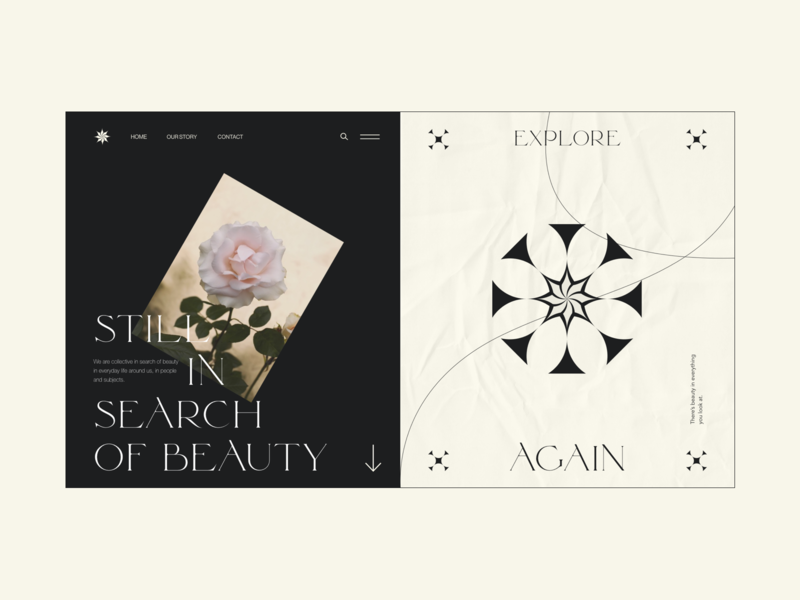 Roses illustration branding typography webdesign web interface ui design
