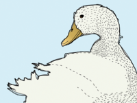 Duck in Spanish is Pato.