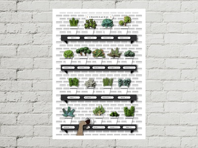Crassulaceae wall cat crassulaceae succulent plants illustration illustrator graphics poster