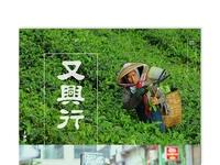 Red Blossom Tea Co.