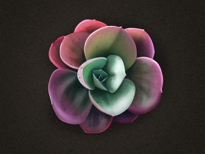 Flower dribbble