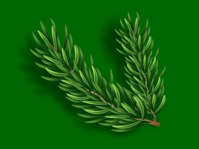 Christmas tree branch. Adobe Illustrator Tutorial. green realistic new year christmas branch christmas tree design illustration vector