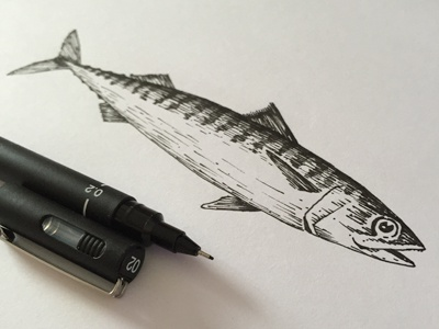 Mackerel pen line ink drawing draw mackerel fish illustration